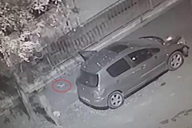 Diyarbakır'da otomobile hapsedilen kedi kurtarıldı