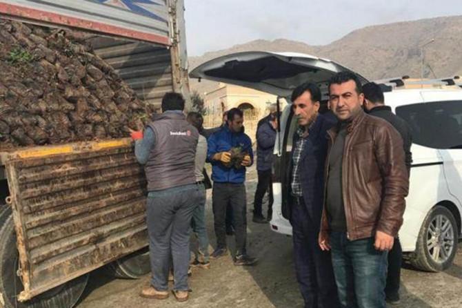 Batman Hasankeyf'te çiftçilere 10 bin fıstık fidanı dağıtıldı