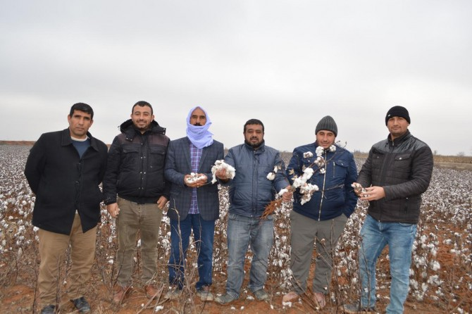 Harran Ovası'nda çiftçiler dertli