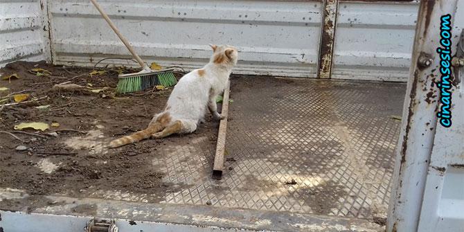 Bismil Belediyesi yaralı kediye sahip çıktı