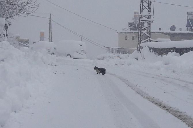 Bitlis kara gömüldü: 287 köy yolu ulaşıma kapandı