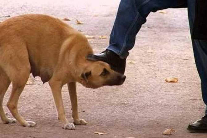 Hayvanlara şiddetin temelinde psikolojik sebepler yatıyor