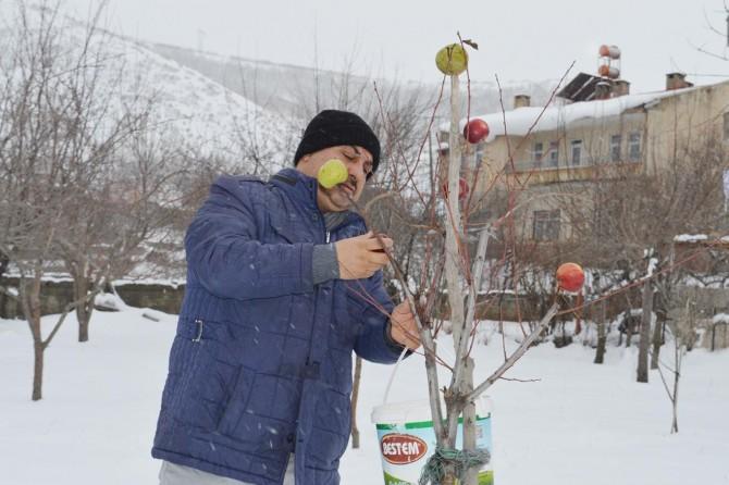 Tatvan'da kuşlar için ağaçları elmalarla donattı