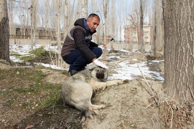Van'da sokak köpekleri Büyükşehir Belediyesinin kontrolünde