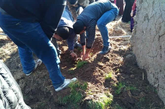 Ceylanpınar'da ahır çöktü: 8 küçükbaş hayvan telef oldu