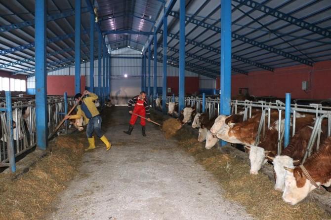 2018 yılı hayvan üreticileri için bir kriz yılı oldu