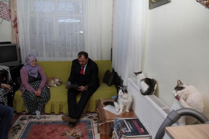 5 yıldır onlarca kediyi evinde besliyor