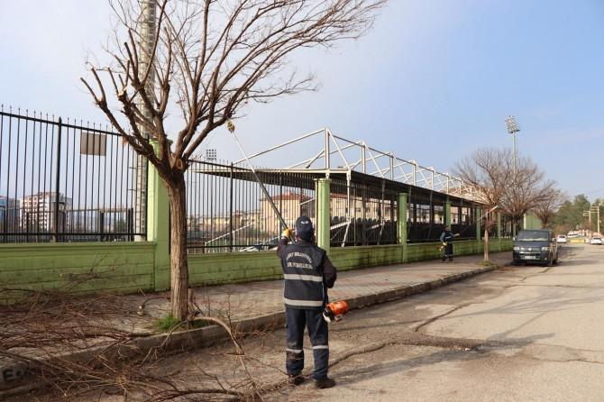 Siirt'te ağaç budama ve bakım çalışmaları devam ediyor