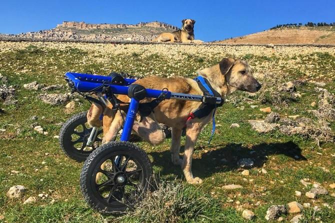 Mardin'de 6 bin sokak hayvanı tedavi edildi