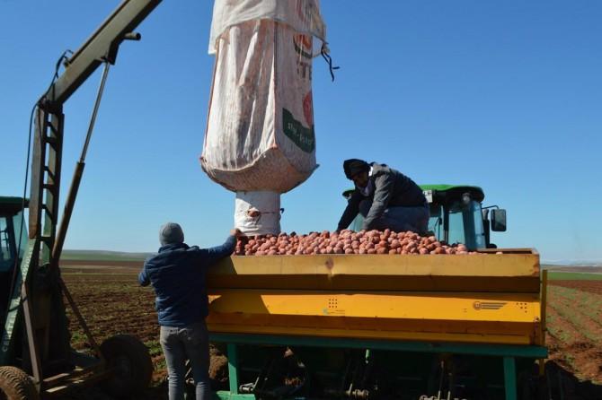 Cipslik patates üreticileri ekime dertli başladı