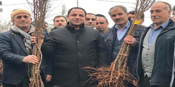 Hani'de çiftçilere badem fidanı dağıtıldı