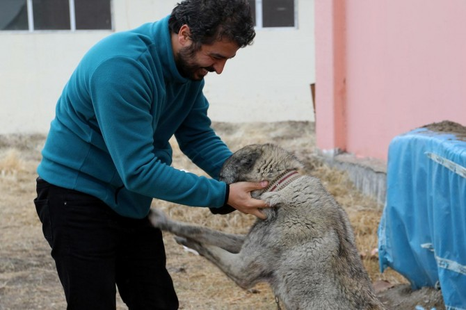 Van'da sahiplendirilen hayvanlar sürekli kontrol ediliyor