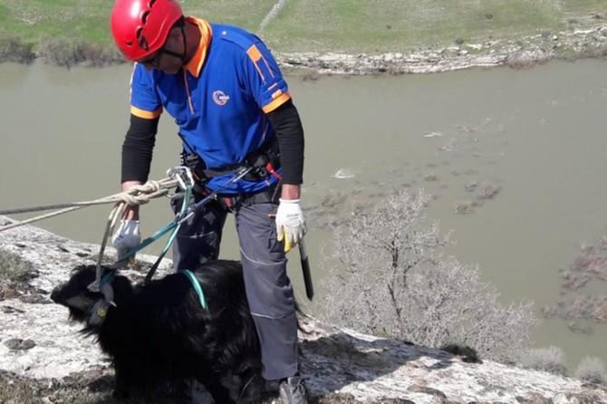 Uçurumda mahsur kalan keçi kurtarıldı