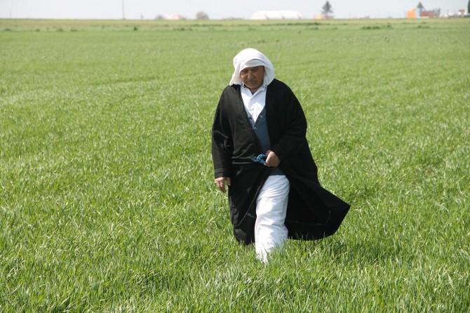 Yağmur Mardinli çiftçilere bereket getirdi