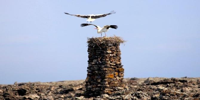 Taş kulelerde her yıl yüzlerce leylek kuluçkaya yatıyor