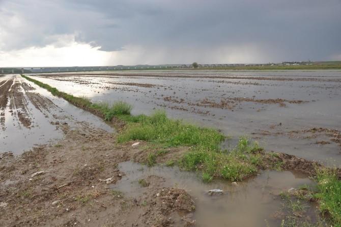 Baraj kapakları açıldı tarlalar su altında kaldı