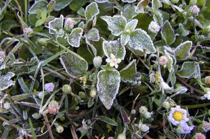 Meteorolojiden zirai don tehlikesi uyarısı