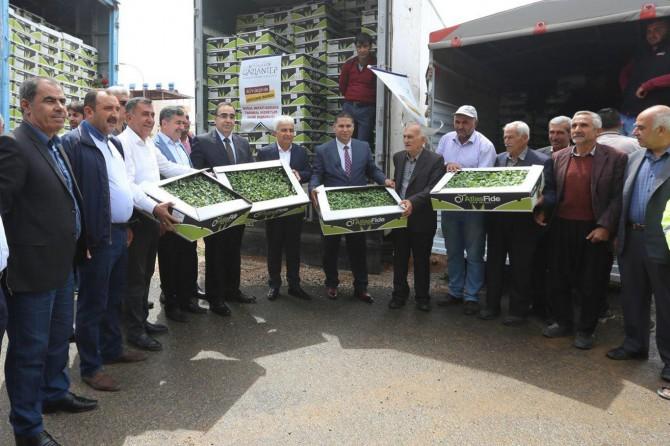 Gaziantep'te çiftçilere biber fidesi dağıtıldı