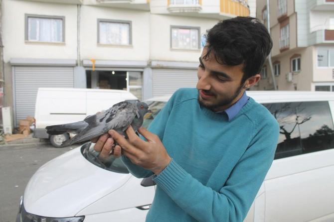 Cizre'de aracın motoruna giren yaralı güvercini tedavi ettirdi