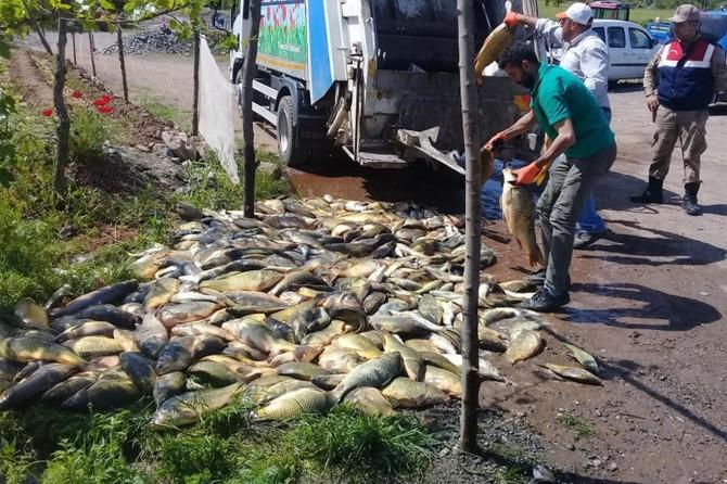 Palu'da kaçak avlanan 1 tondan fazla balık çöpe atıldı
