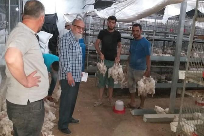 Filistin'deki sıcak hava dalgası çiftçiye büyük zarar verdi