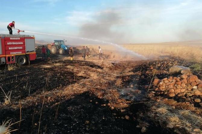 Derik'te çıkan yangında 30 dönüm arpa kül oldu