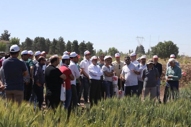 Diyarbakır'da tarla şartlarında çeşit tanıma eğitimi