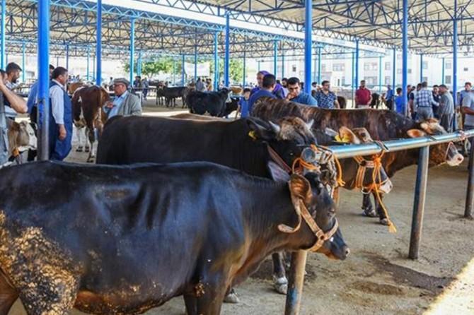 YKS için hayvan pazarı kapatılacak