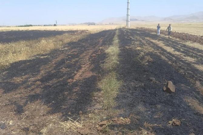 Derik'te 70 dönüm buğday kül oldu