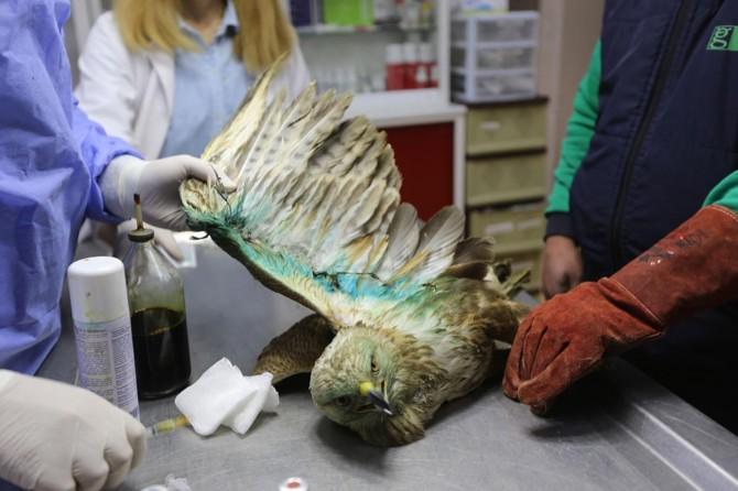Yaralı yabani hayvanlar bu hastanede hayata tutunuyor