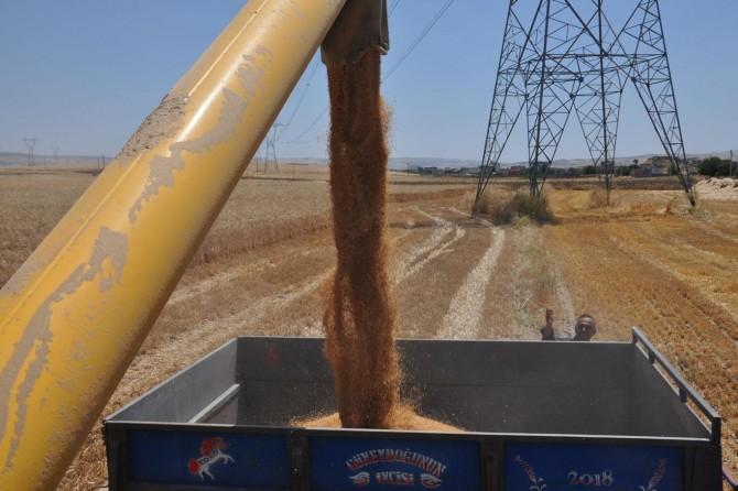 Batma'da buğday hasadı çiftçinin yüzünü güldürdü