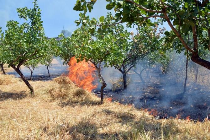 Siirt'te fıstık bahçelerinde çıkan yangında 60 dekarlık alan zarar gördü