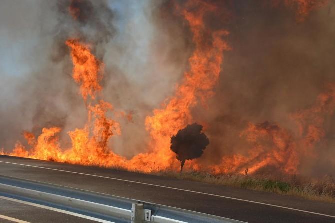 Mardin'de anız yangını ağaçları küle çevirdi