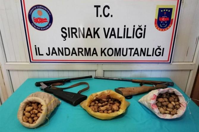 Beytüşşebap'ta salep soğanı toplayan kişilere 204 bin TL ceza verildi