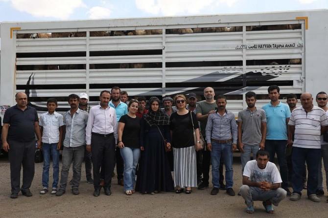 Diyarbakır'da genç çiftçilere küçükbaş koyun dağıtımı yapıldı