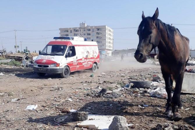 Ayağı kırılan at İzmir'e sevk edildi