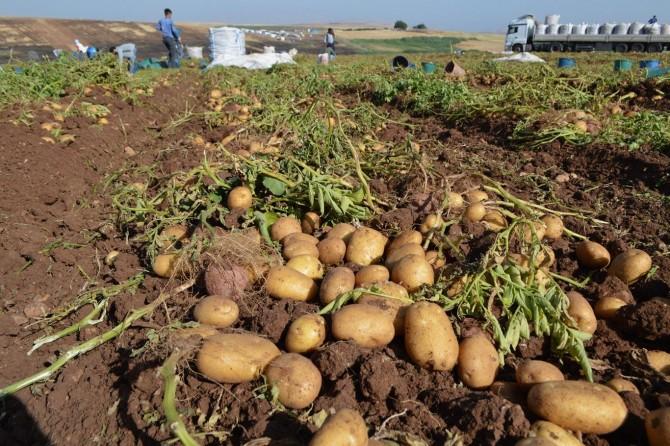 Türkiye'nin tarım politikası kötüye gidiyor
