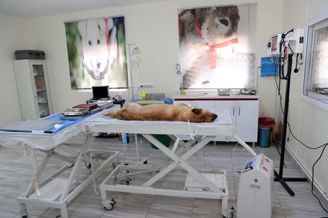 Mardin'de 3 ayda 500 hayvan ameliyat edildi