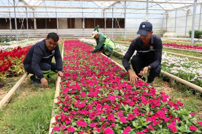 Kendi seramızda şu ana kadar 900 milyon çiçek yetiştirdik