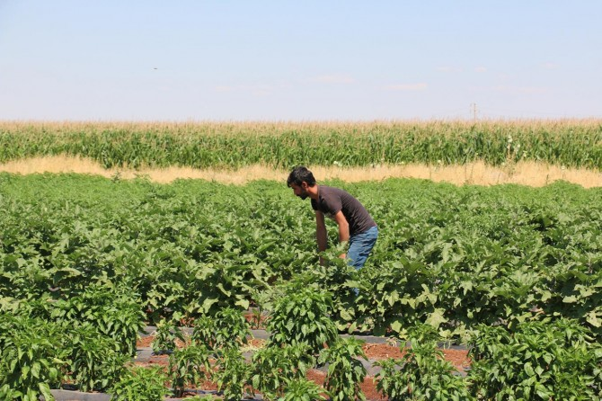 Yerli tohumun desteklenmesini istiyoruz