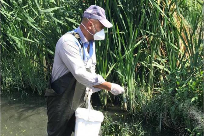 Batı Nil Virüsü için çalışmalar artırıldı