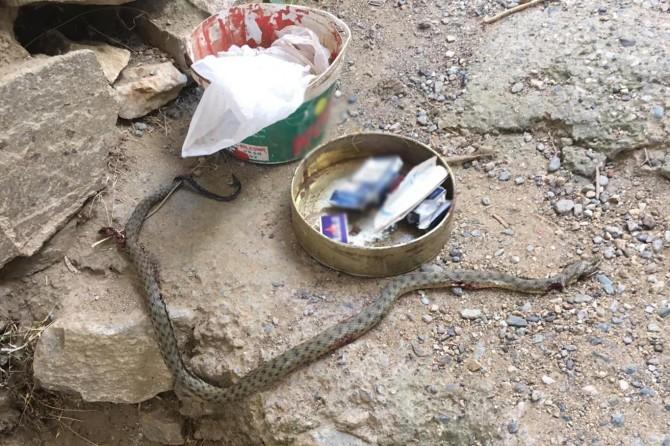 Çüngüş'te camiye giren yılan öldürüldü