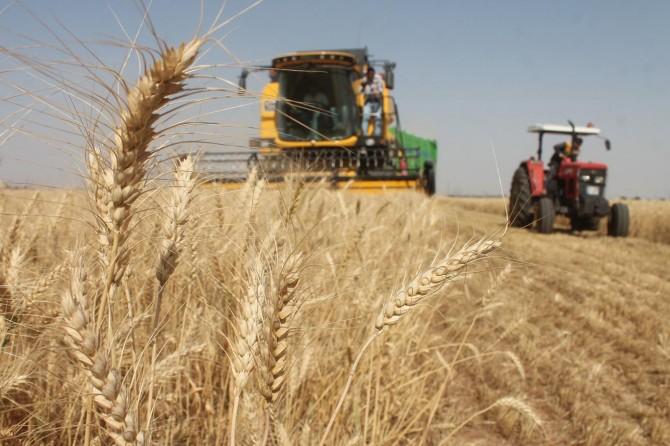 Erdoğan: Yağlı tohum ve hububatta desteği Kurban Bayramı'ndan önce ödeyeceğiz