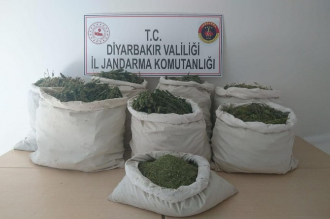 Diyarbakır'da 1 milyon 69 bin kök Hint keneviri ele geçirildi