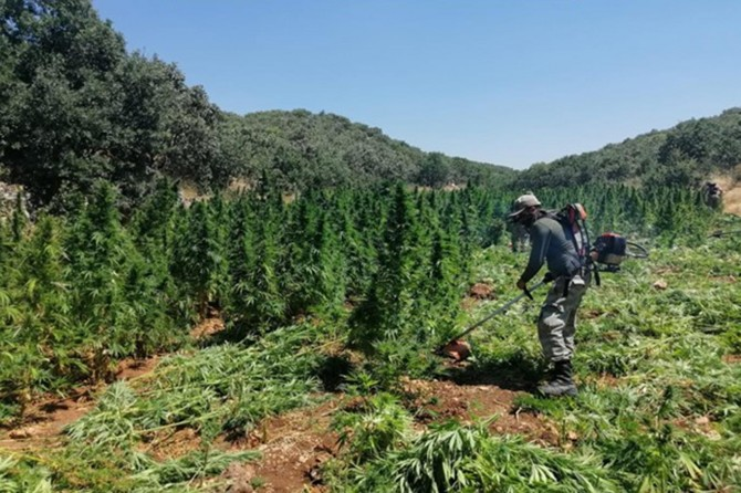 Lice'de 1 milyon 288 bin 960 kök kenevir bitkisi imha edildi