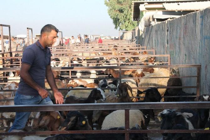 Hayvan pazarlarında durgunluk yaşanıyor