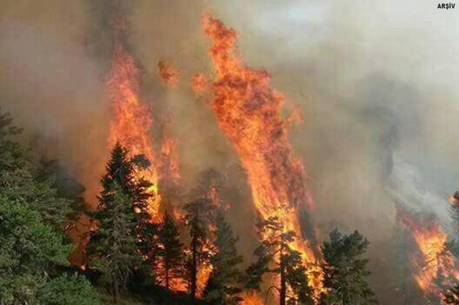 Çanakkale Eceabat'ta orman yangını