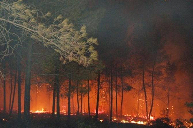 Tavşanlı'da orman yangını