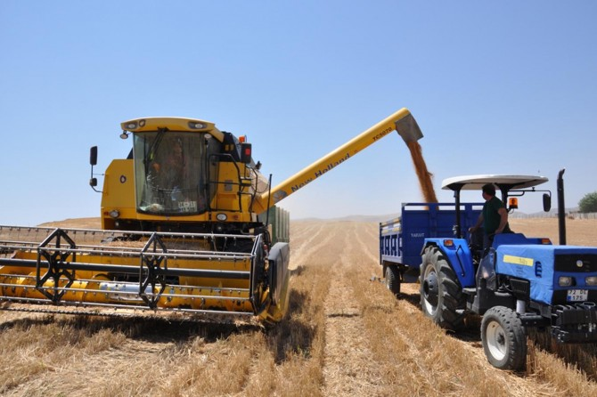 TMO istenen fiyatı vermeyince çiftçi tüccarın eline kaldı