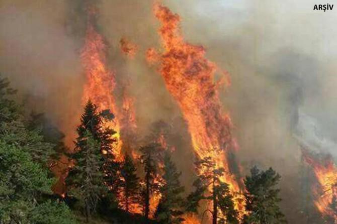 Bakan Pakdemirli: İzmir'deki yangını kontrol altına aldık